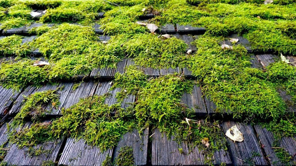 roof moss treatment